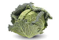 Cabbage, Savoy