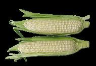 Corn, White