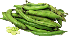 Fava Beans (Broadbeans)