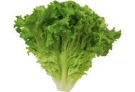 Lettuce-Green-Leaf