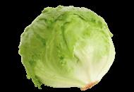 Lettuce-Iceberg